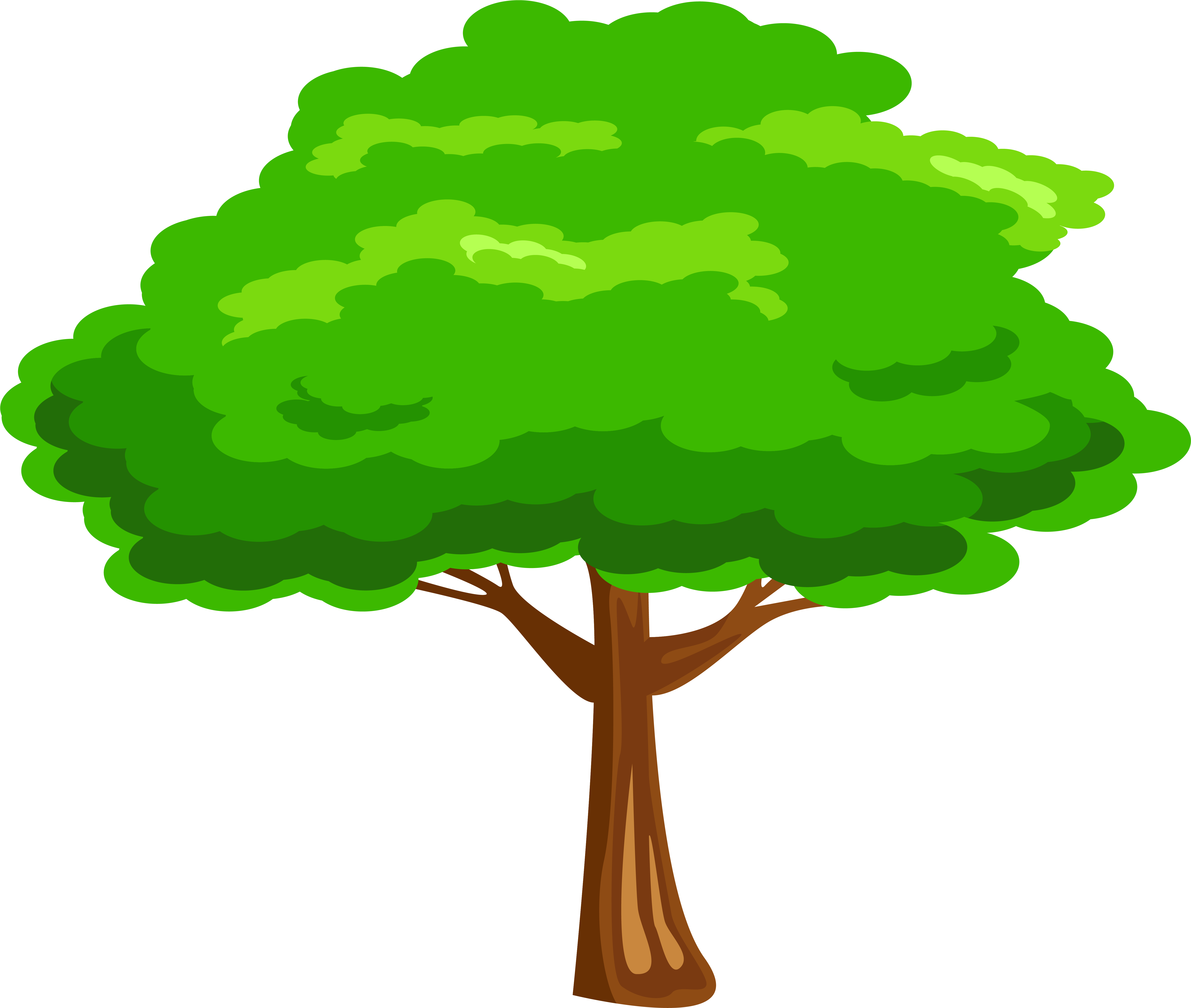 Leaves Clipart Mango Tree   Clipart Tree Png Transparent Png ...
