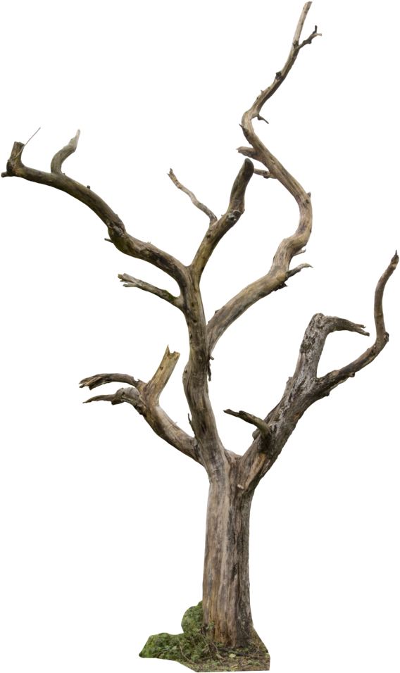 Dead Tree Clipart Animated - Dead Tree Png Transparent Png