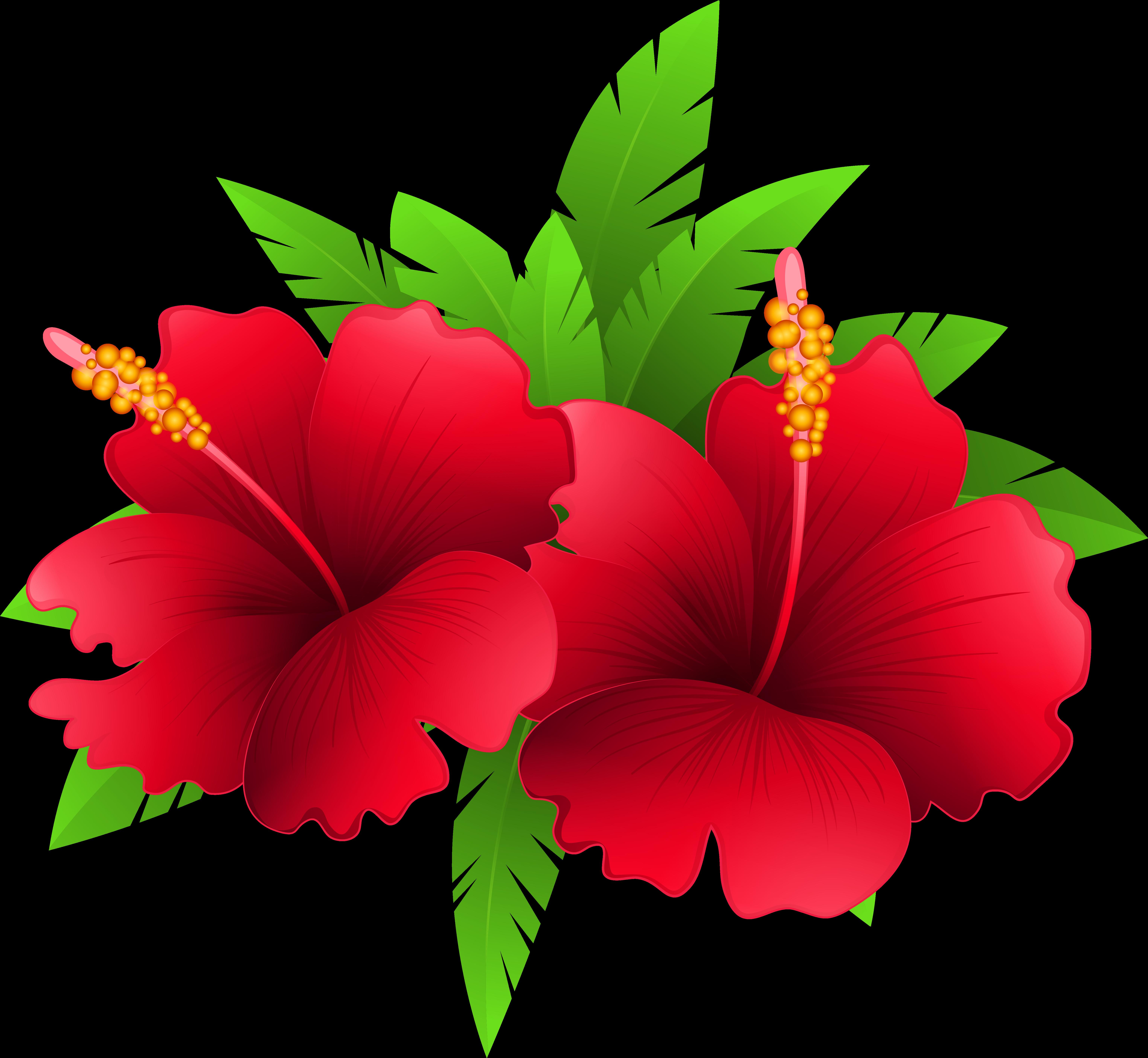 Экзотические цветы картинки вектор