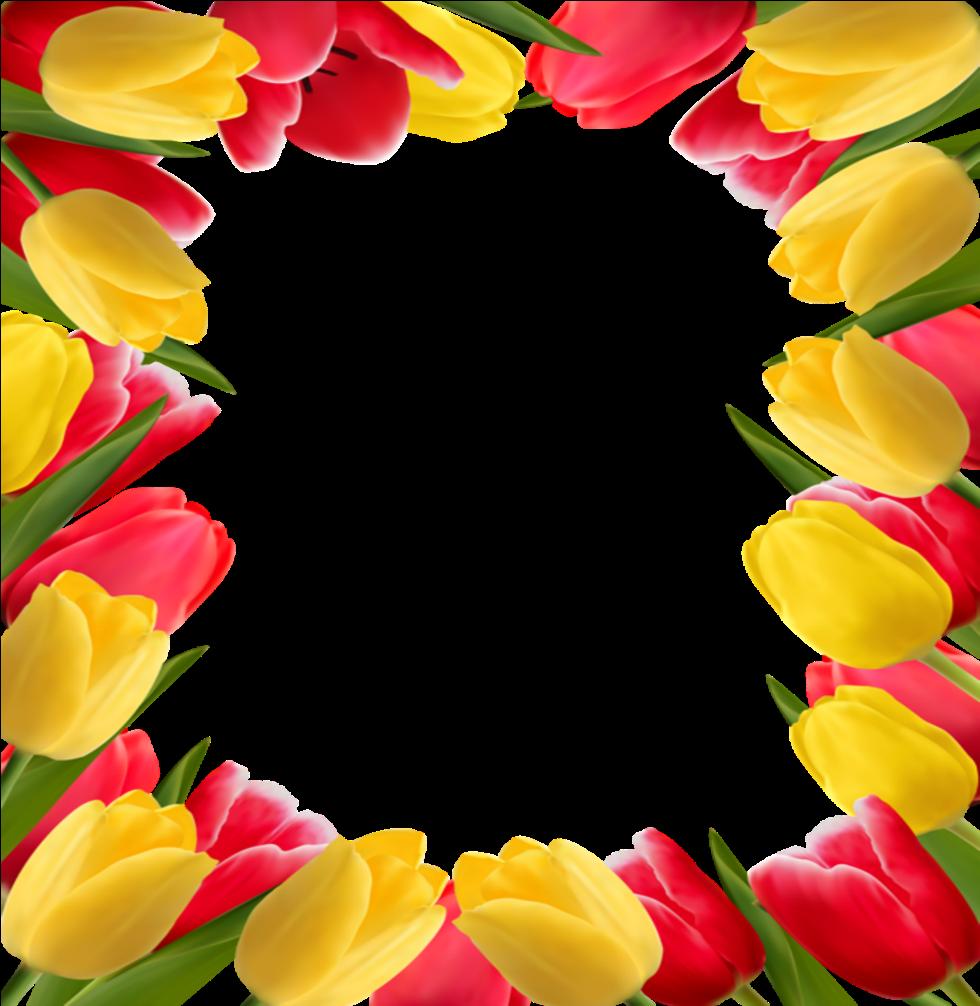 Mq Flowers Flower Frames Border Borders - Tulip Flower ...