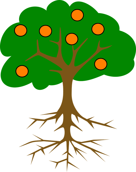 Collection Of Cartoon Orange Tree Tree Drawing With Fruits Clipart Full Size Clipart 1193602 Pinclipart Here are steps on how to draw a simple tree, a subject popular with artists as they depict the beauty of nature. tree drawing with fruits clipart