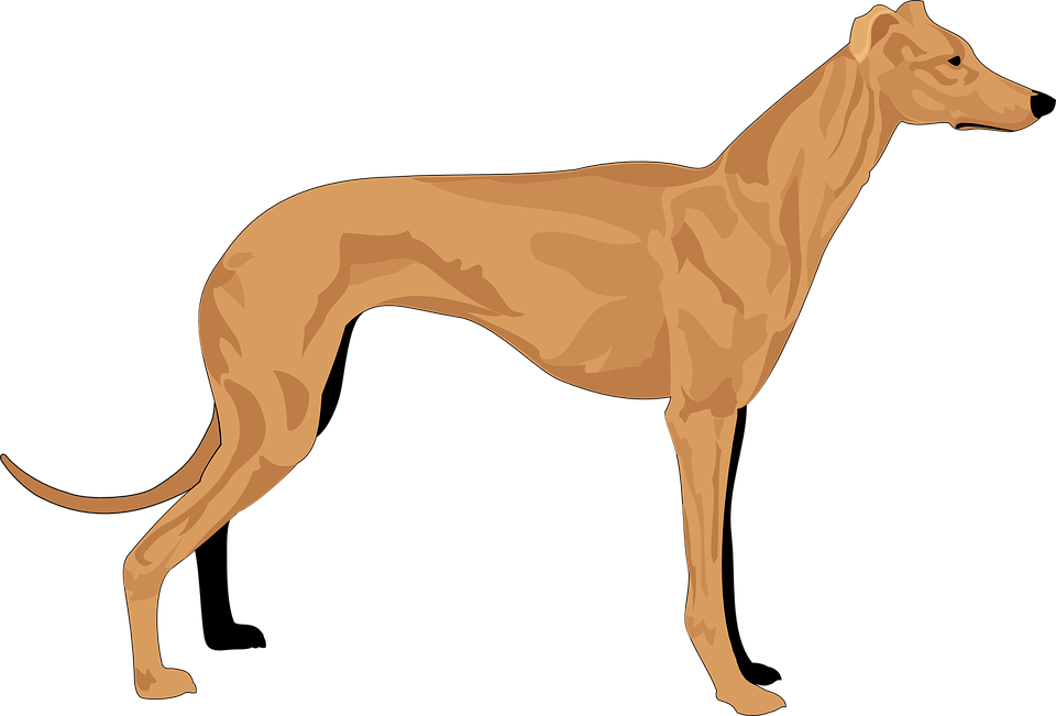 Collection Of Hound Dog Clipart - Hound Clipart - Png ... (960 x 651 Pixel)