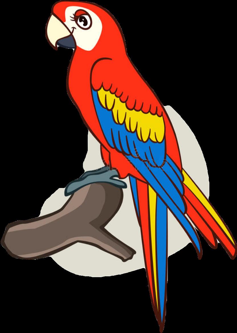 Macaw Drawing Cute