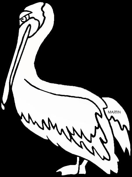 Pelican | 100 ideas on Pinterest in 2020 | pelican, mykonos, greek islands