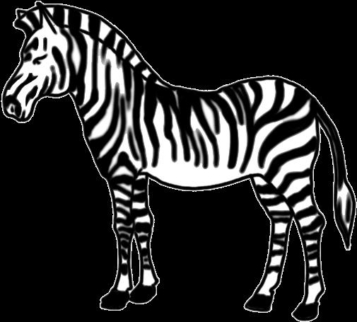 how to draw zebra for kids easy stepstep  zebra