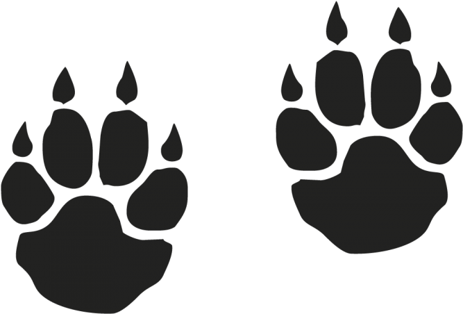 Tiger Paw Png  Clipart Of Download - A Tiger Footprint -