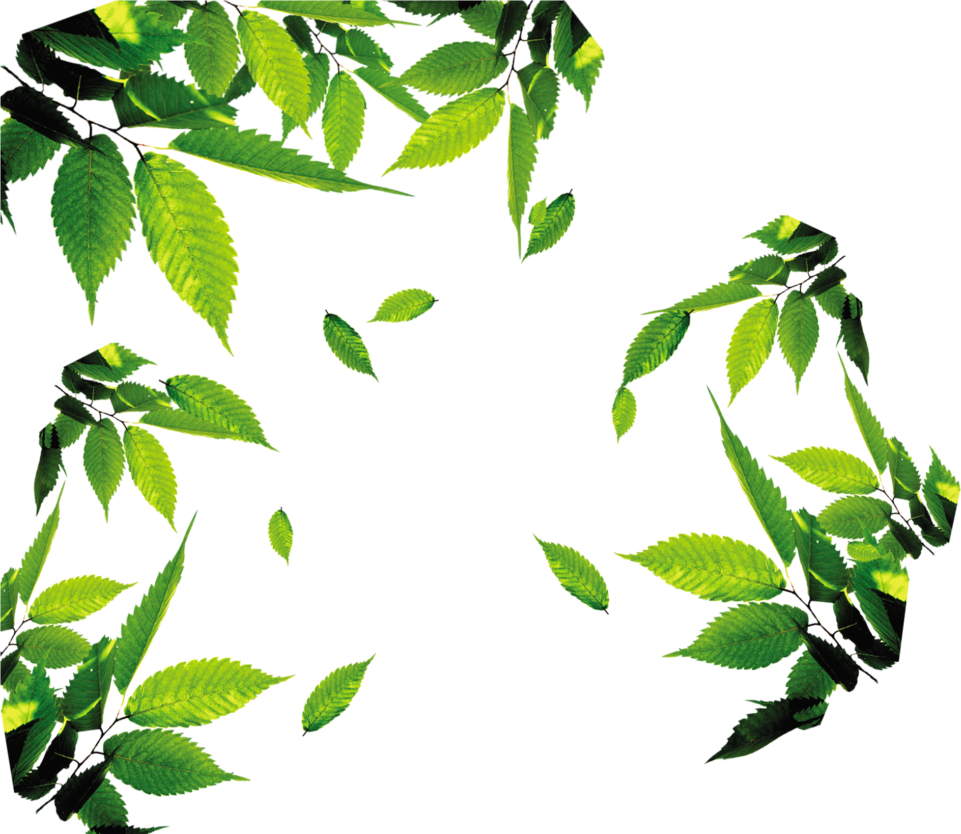 Leaves Png Hd Images / Fall Leaves Png Hd Free Fall Leaves ...