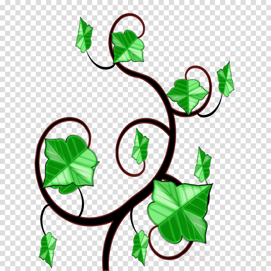 ivy clipart clip art - vines ivy drawing - png download - full size clipart  (#1947160) - pinclipart  pinclipart.