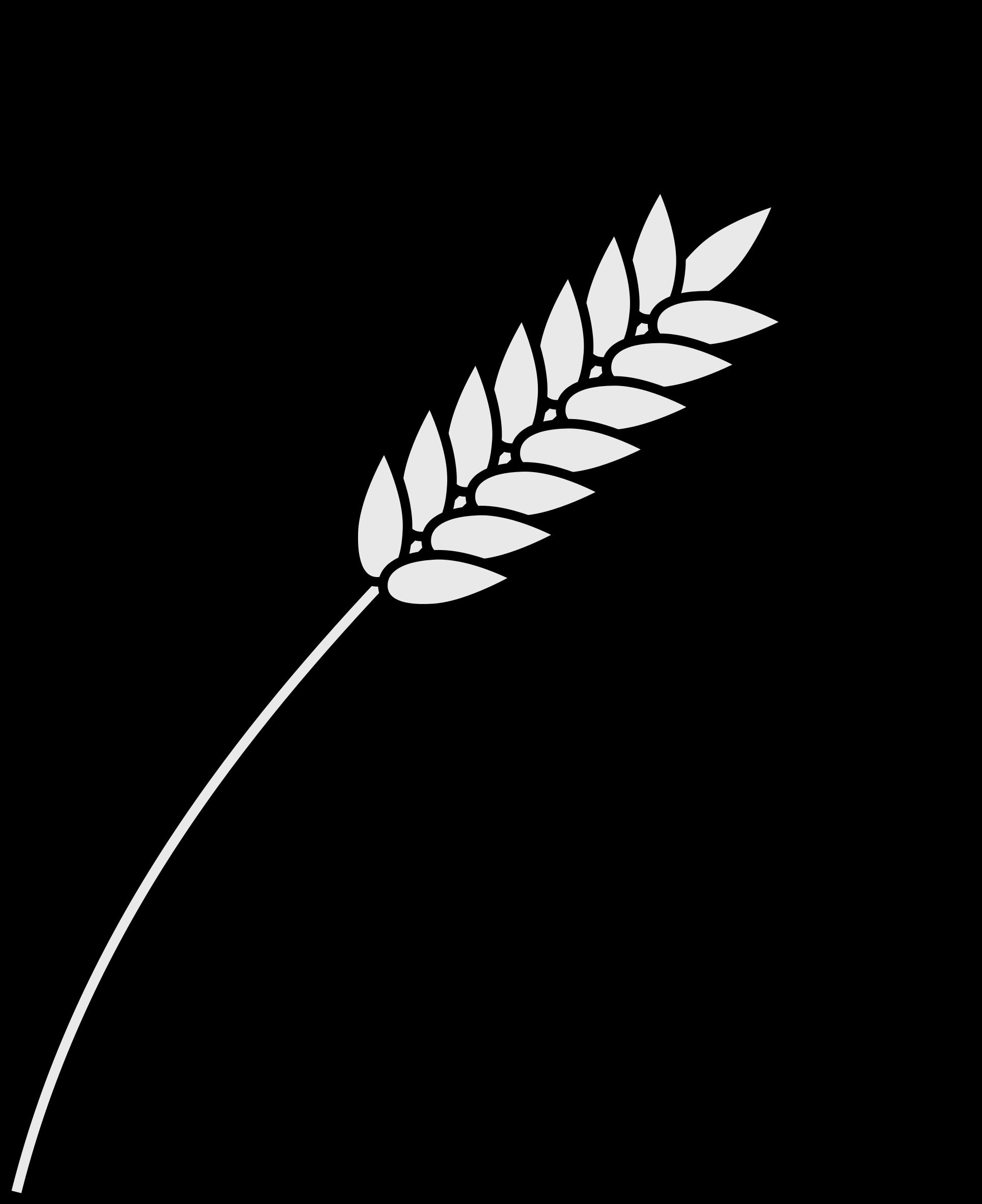 картинка колос пшеницы раскраска некоторые утверждают
