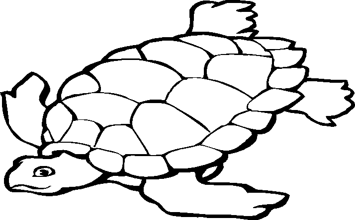 Transition Drawing Tortoise Graphic Transparent Library Animais