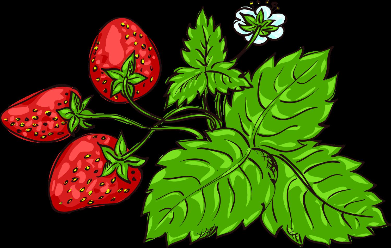 рисунки с ягодами внушает дочери, что