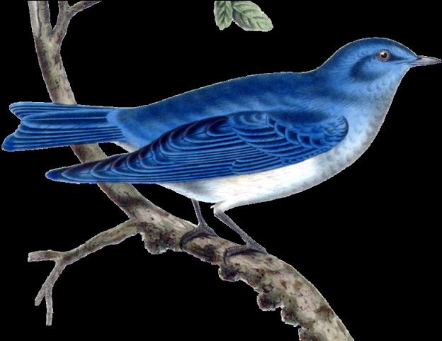 Oiseau bleu sur pinclipart
