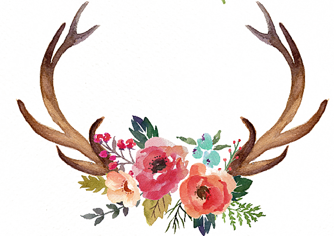 Freeuse Stock Deer Antler Moose Clip - Antlers With ...