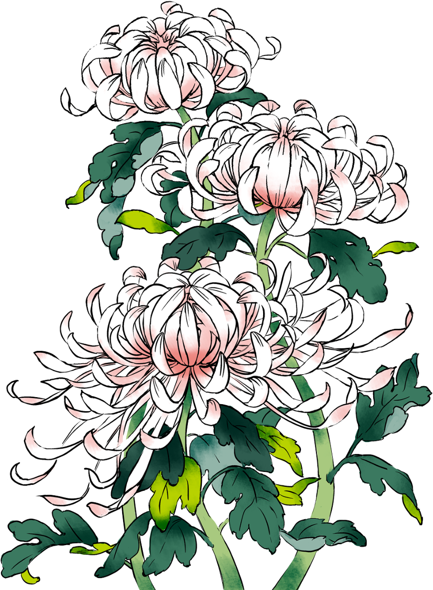 Picture Download Chrysanthemums Drawing Sketch Pixiv Flower Clipart Full Size Clipart 380786 Pinclipart