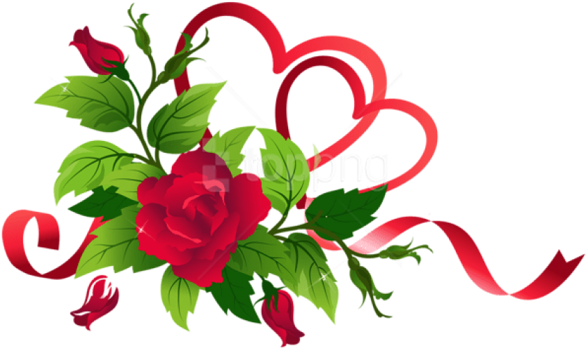 Image result for red rose png
