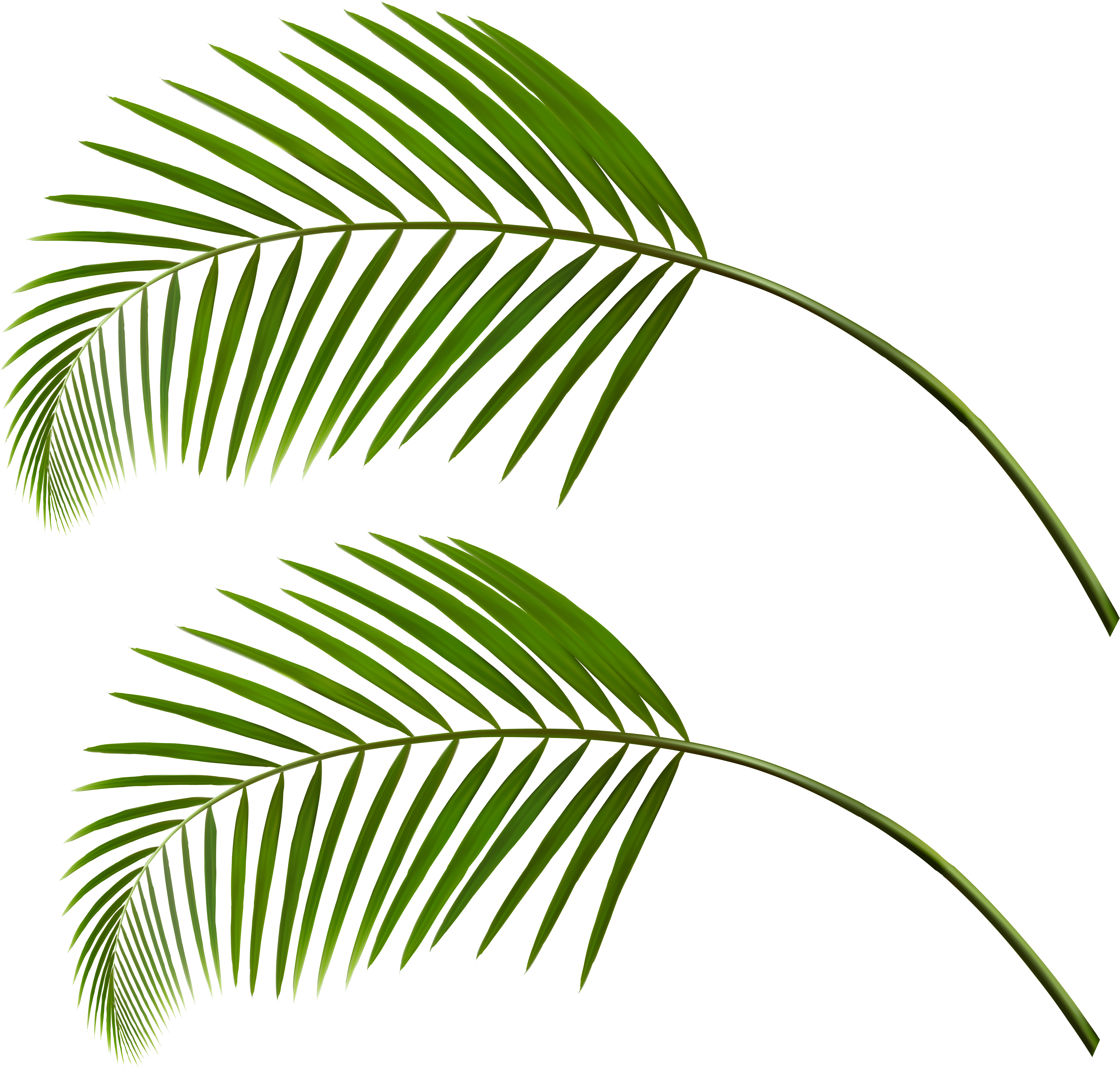 0, - Transparent Palm Leaves Png Clipart - Full Size ...