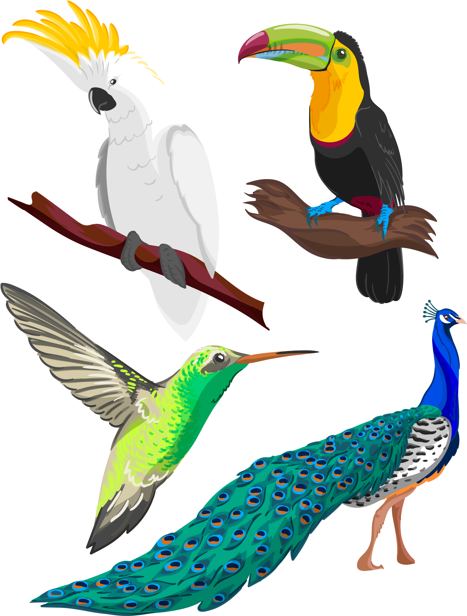 Clipart library birb drawing pencil tropical bird drawing png