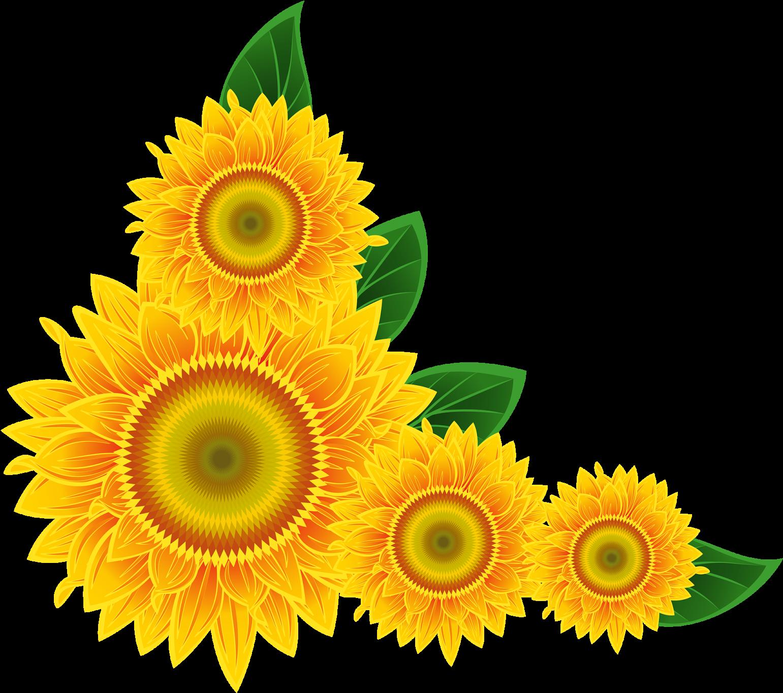 Sunflower Clip Art Images Xbox - Sunflower Corner Border ...
