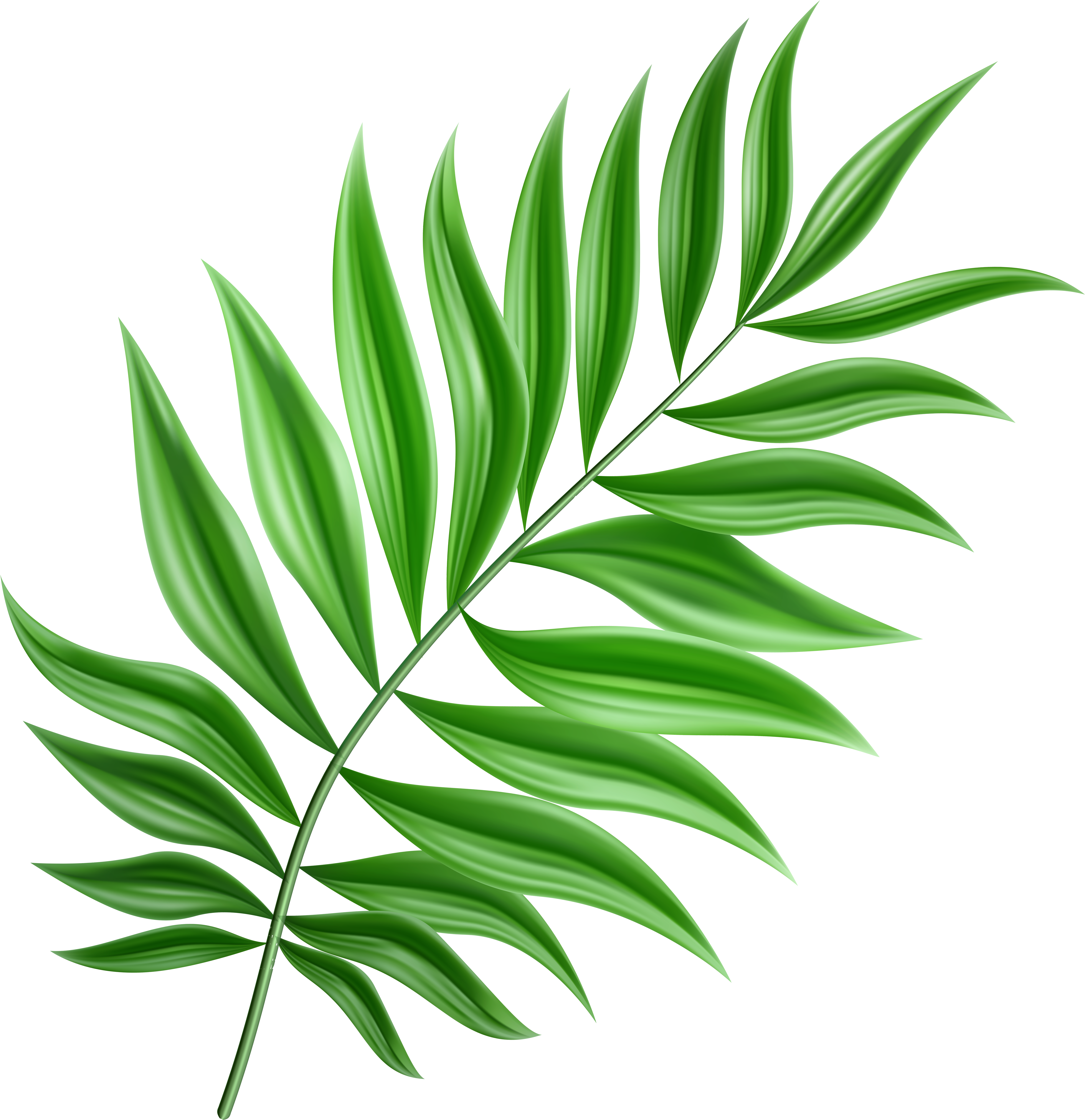 Green Palm Leaf Png Clipart Transparent Png - Full Size ...