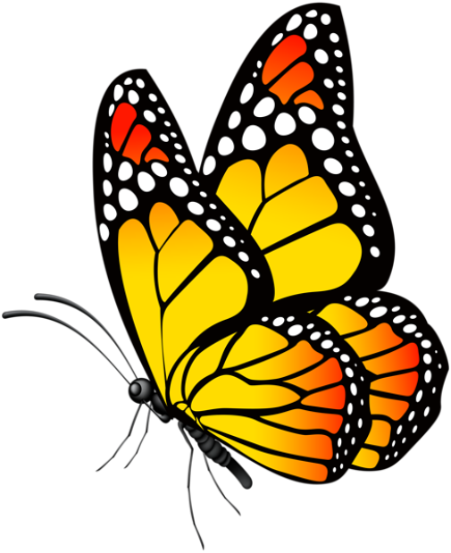 Butterfly Clip Art Butterfly Drawing Butterfly Painting