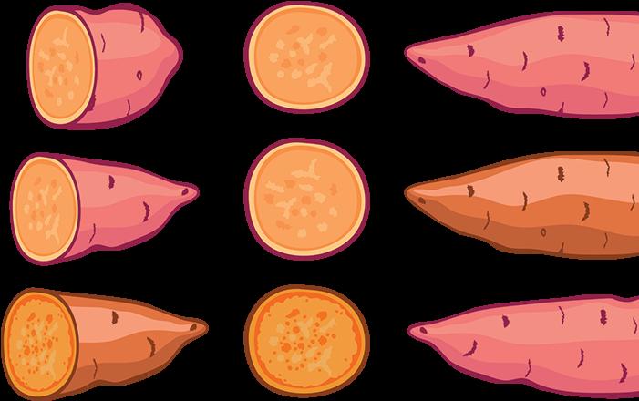 Sweet Potato Illustration Orange Clipart - Full Size ... (701 x 440 Pixel)