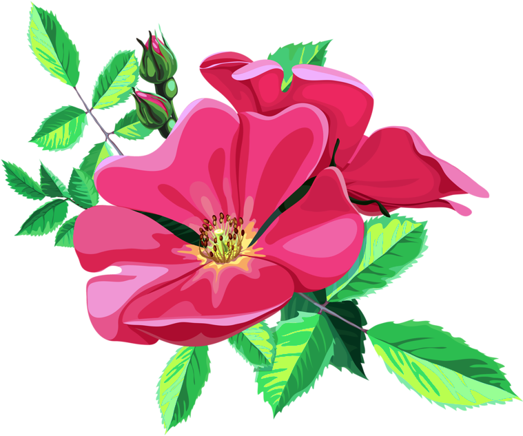 Transparent Animated Flower Png Clipart - Full Size ... (759 x 633 Pixel)