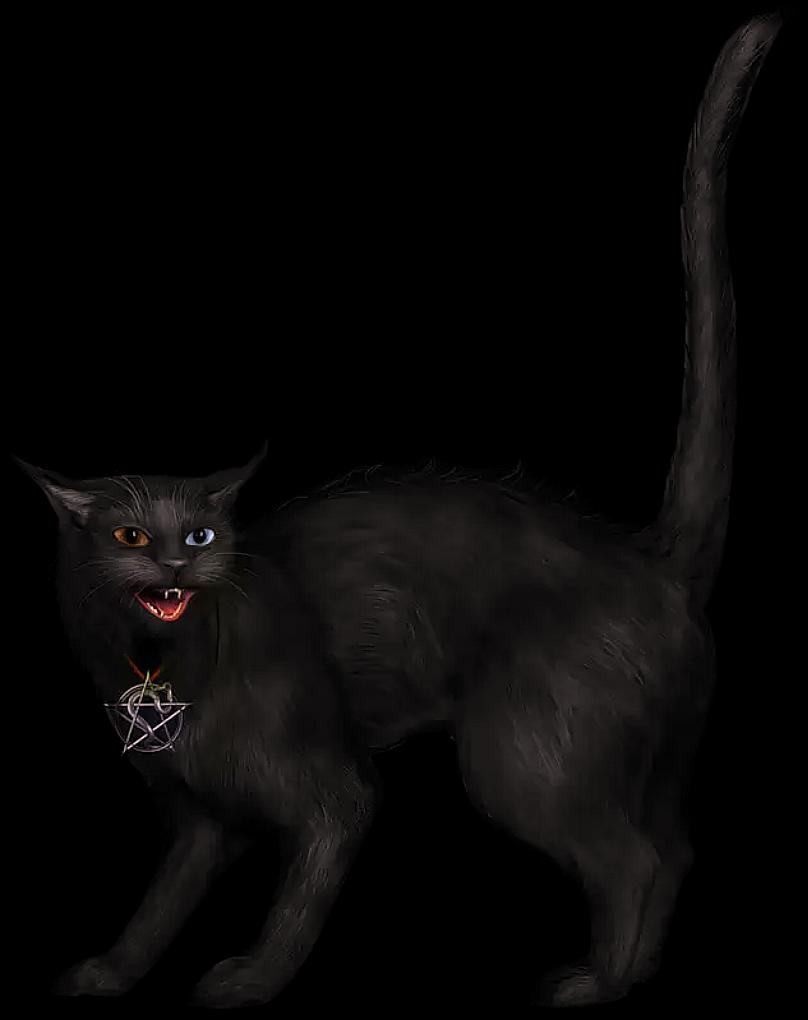 Black Cat Clip Art - Black Cat Gif Png Transparent Png ...