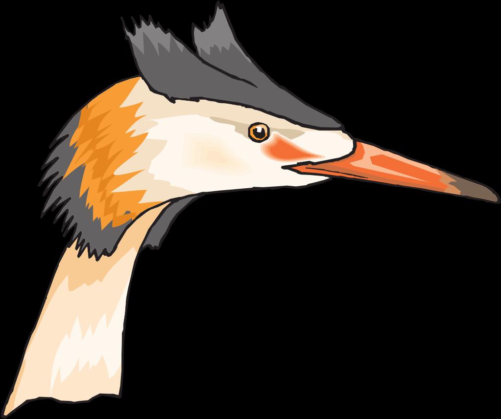Kepala Burung Bangau Clipart Full Size Clipart 5648271 Pinclipart