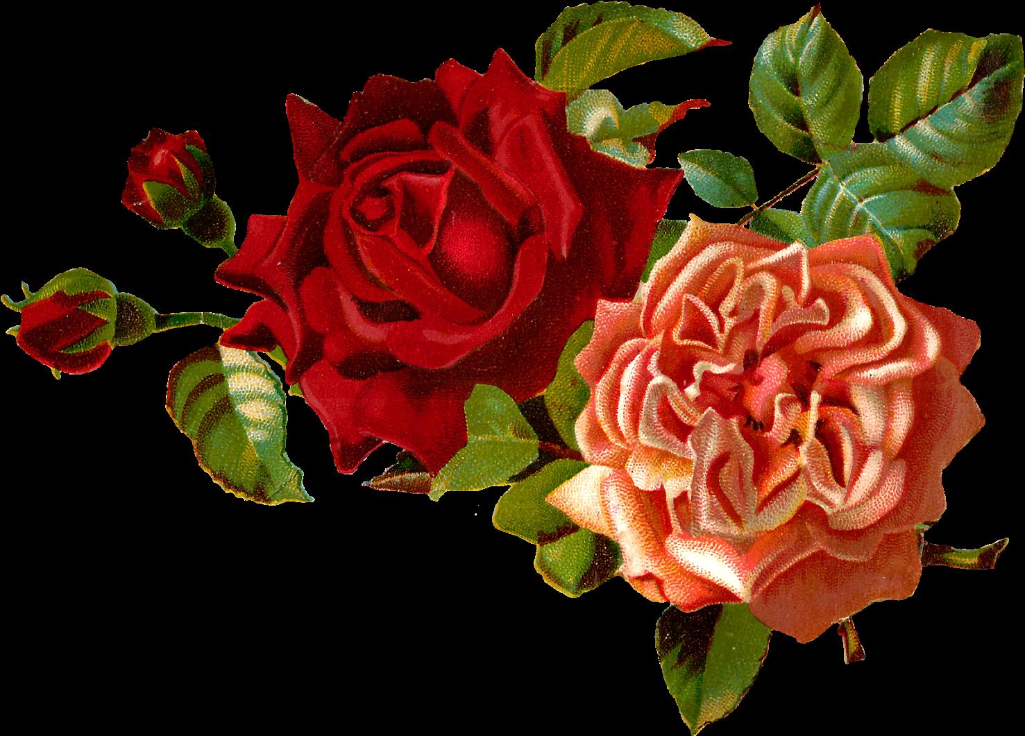 Red Flower Clipart Vintage Red Transparent Vintage Flowers Png