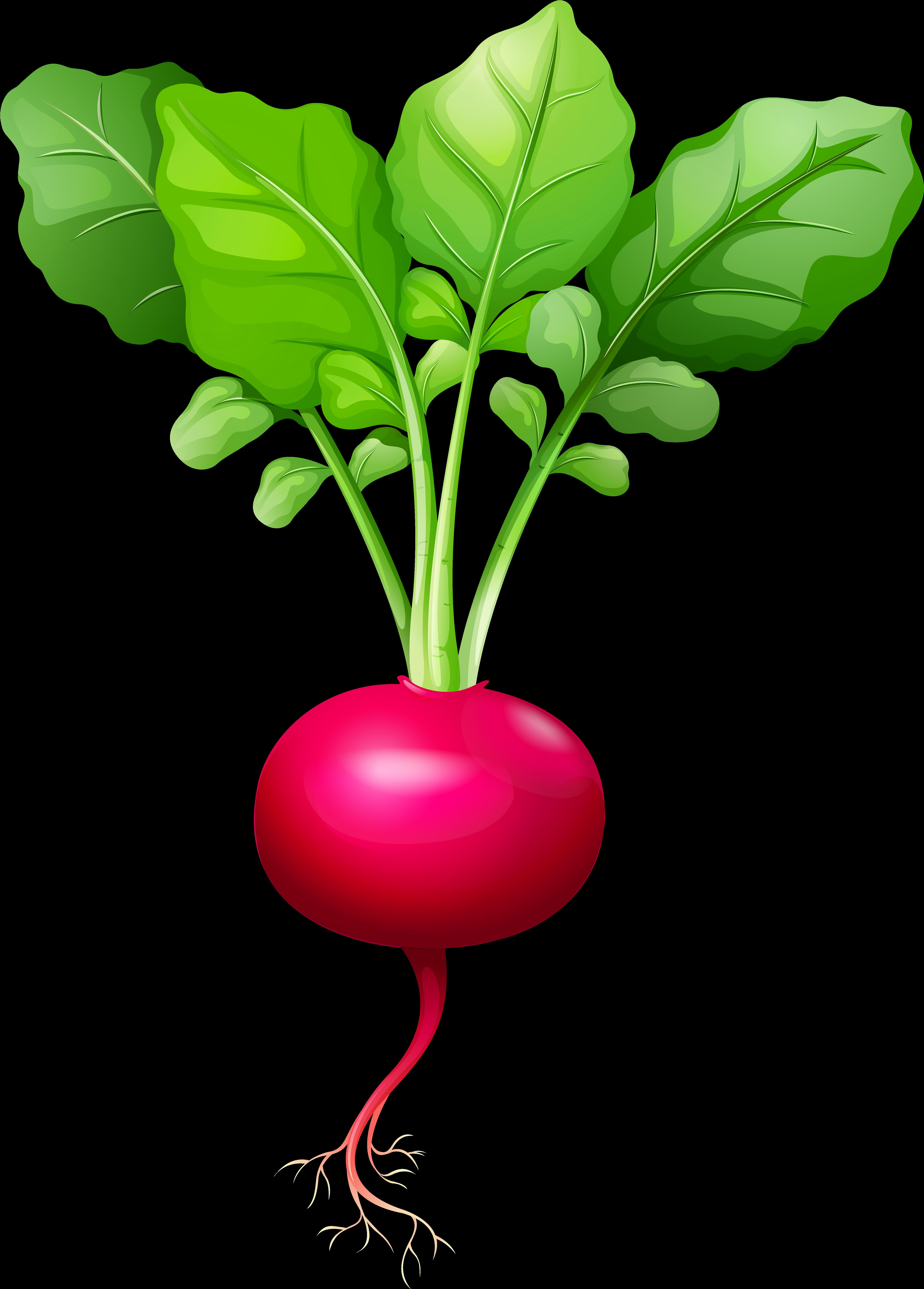 Lettuce clipart flat, Lettuce flat Transparent FREE for download on  WebStockReview 2020