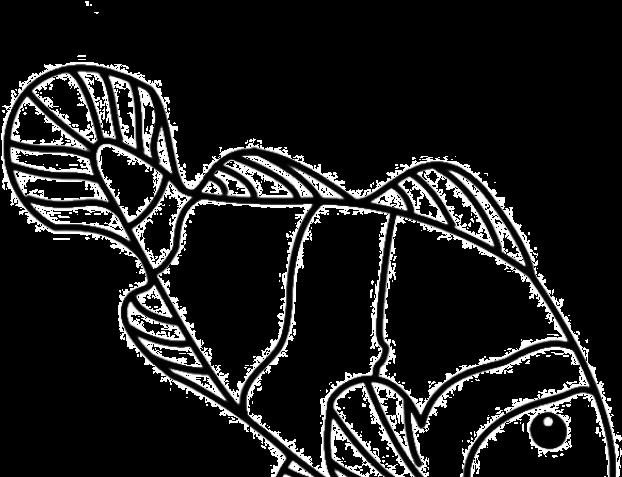 Koi Fish Clipart Draw In Color Gambar Sketsa Ikan Nemo Png Download Full Size Clipart 757800 Pinclipart