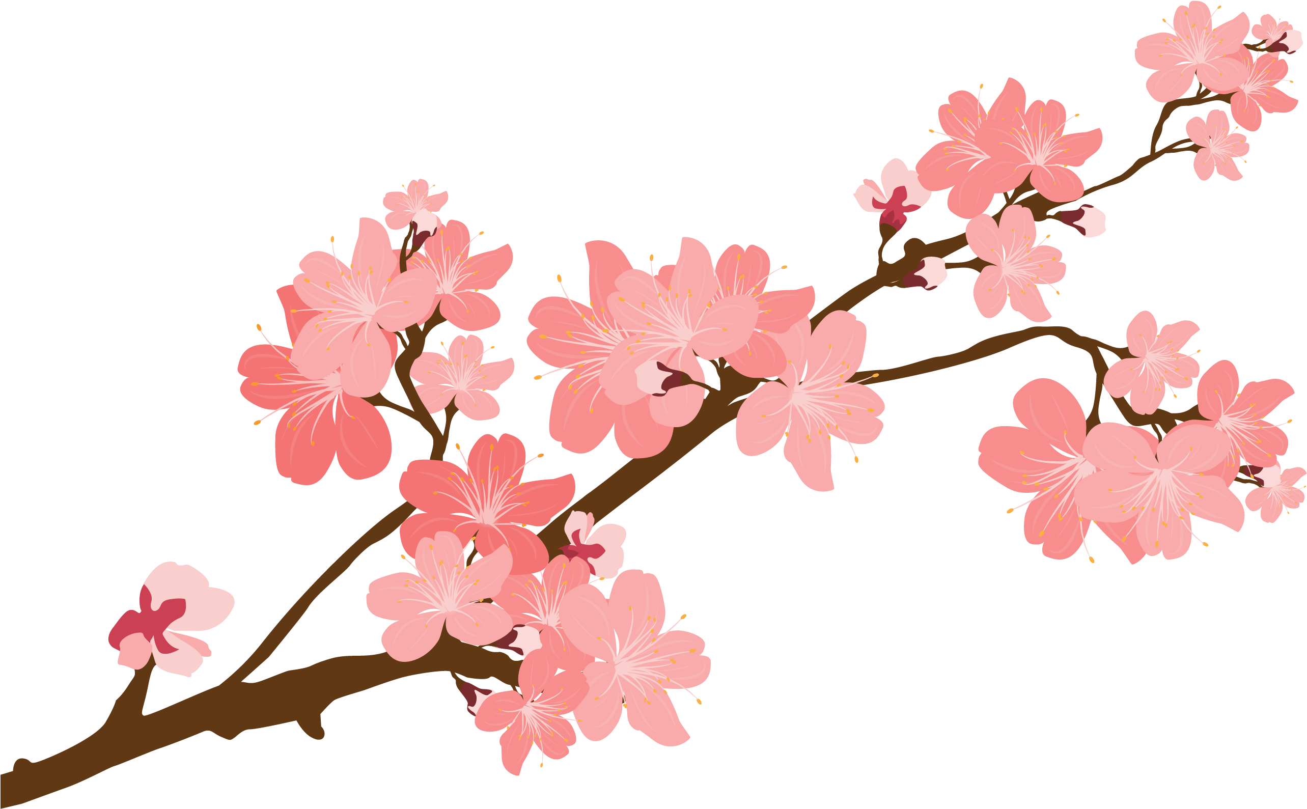Download Cherry Blossom Clipart At Getdrawings ...