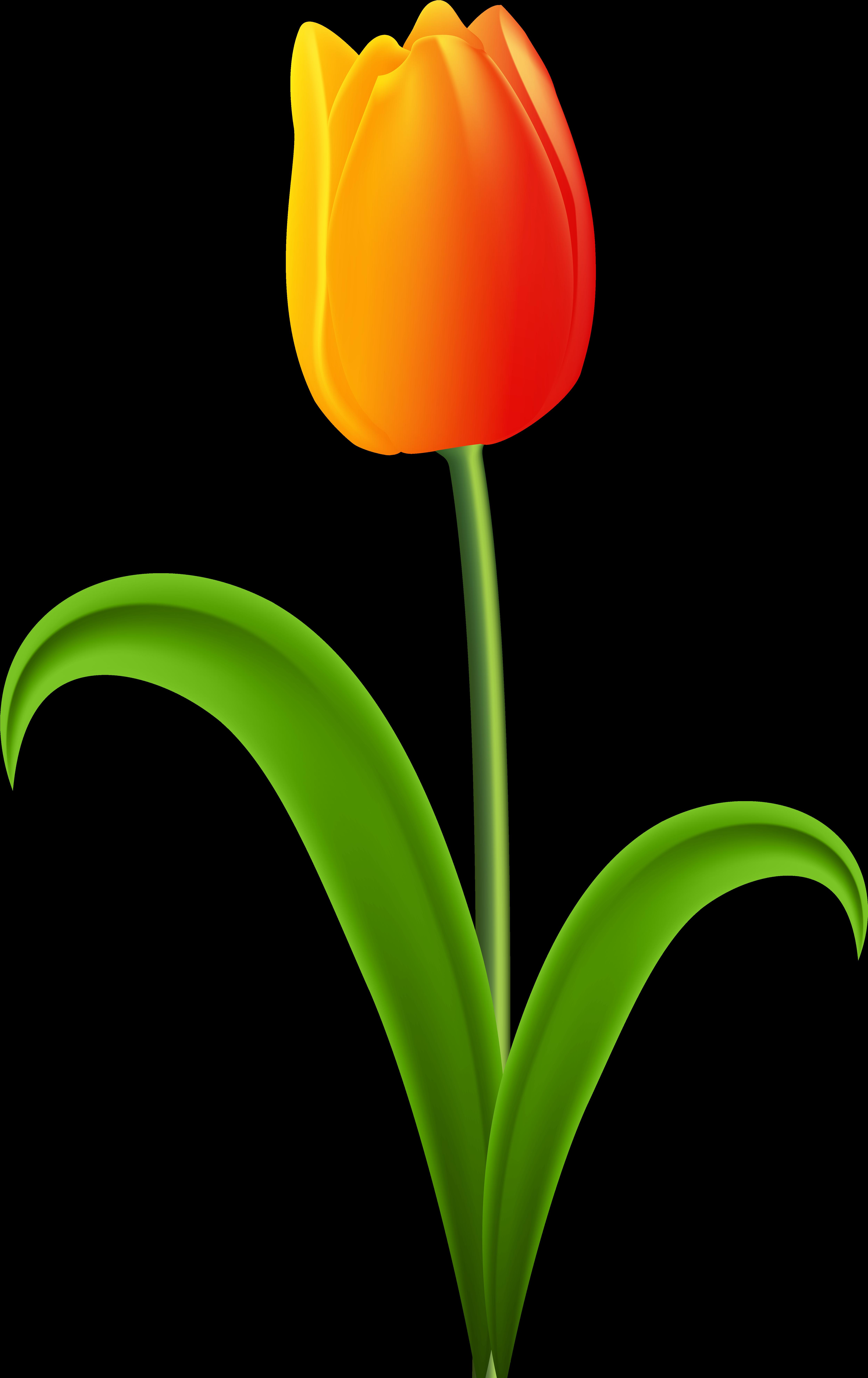 Тюльпаны картинки для детей на прозрачном фоне