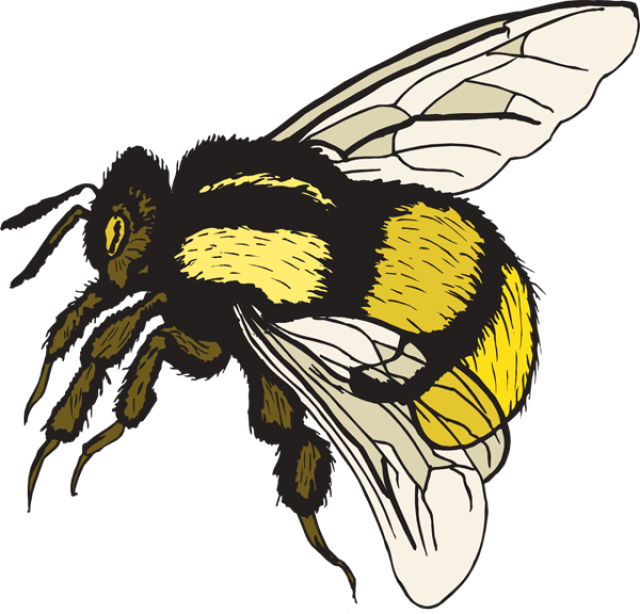 Free Clip Art Bumble Bee Png Download Full Size Clipart 898115 Pinclipart