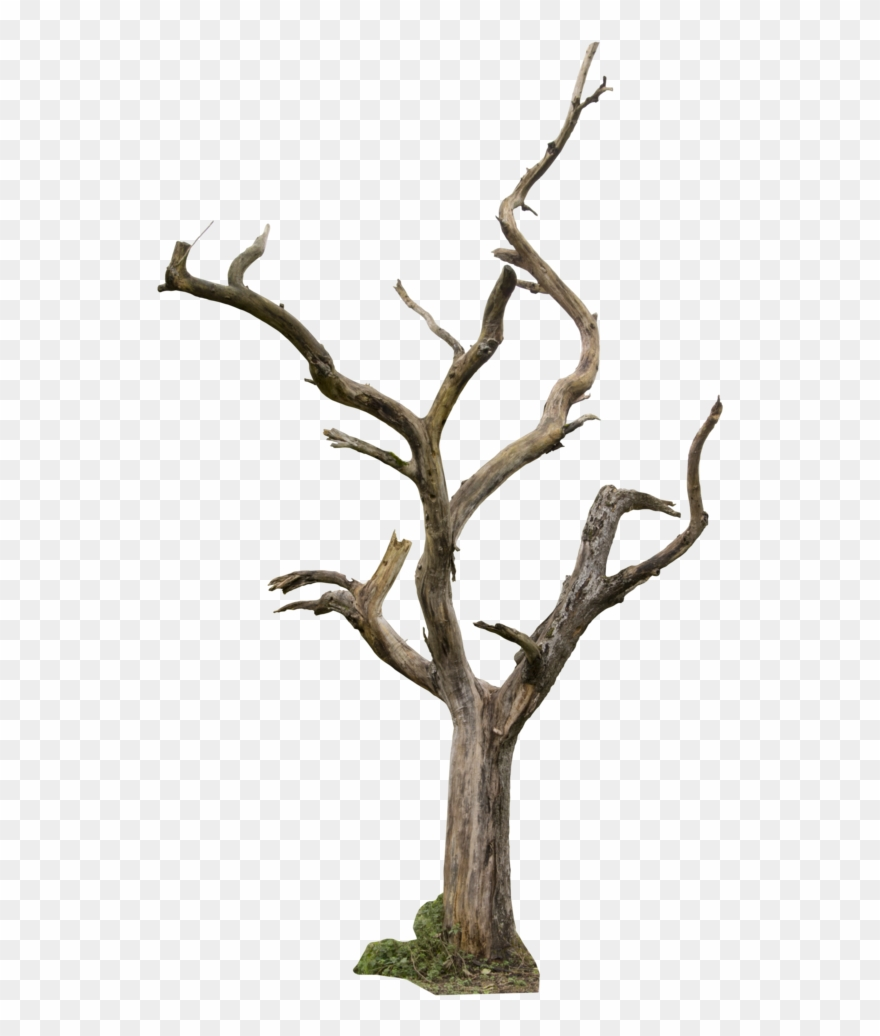 Dead Tree Clipart Animated Dead Tree Png Transparent Png 1762 Pinclipart Browse our dead tree cartoon images, graphics, and designs from +79.322 free vectors graphics. dead tree png transparent png