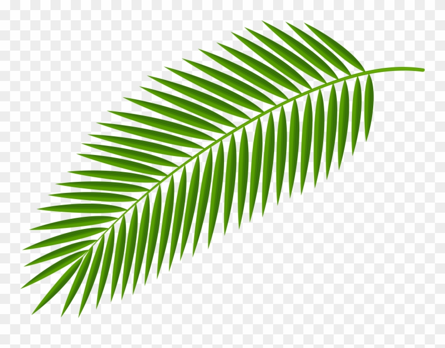 Leaves Clipart Palm Branch - Palm Branch - Png Download