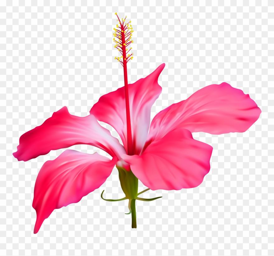 Hibiscus Flower Transparent Png Clip Art Event Luau Hibiscus