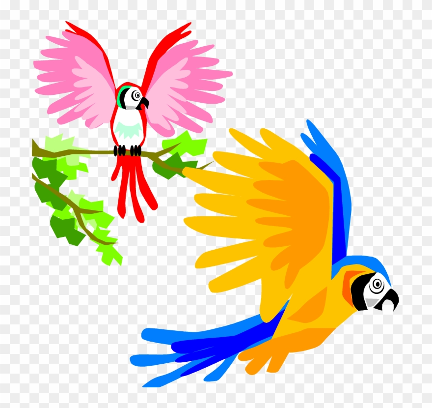Birds tropical. Parrot clipart colorful flying