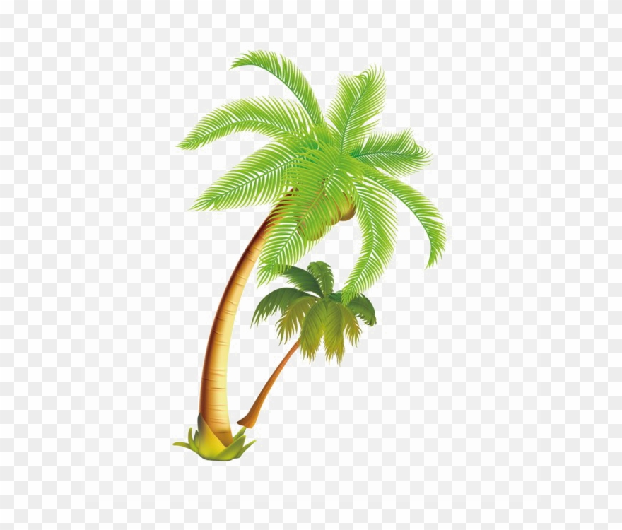 Coconut Tree Vector Png Clipart Palm Trees Coconut Palm Trees