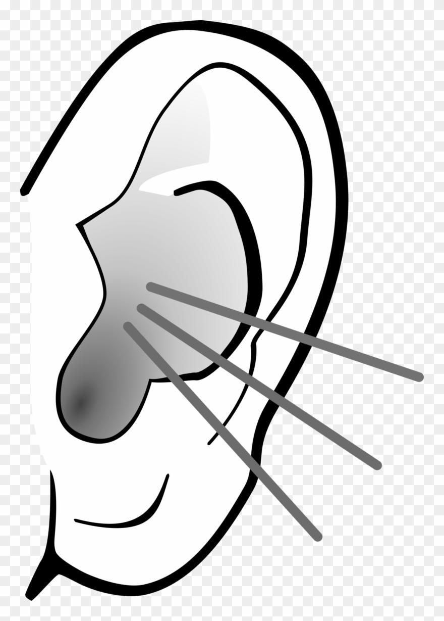 Ear Image Free Download Clip Art - Listening Ear Png ...