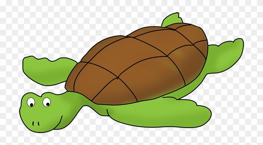 Cartoon Shark Sea Turtle Clip Art Clip Art Turtles Png