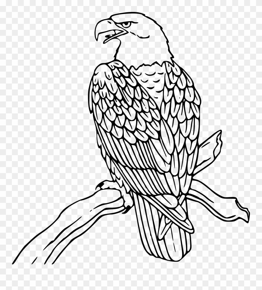 Clipart free download free eagle clipart eagles clip art black and white eagle png