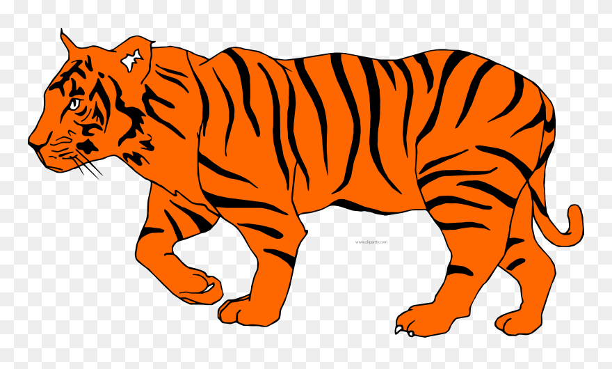 White Tiger Clipart Depauw - Illustration Of A Tiger - Png