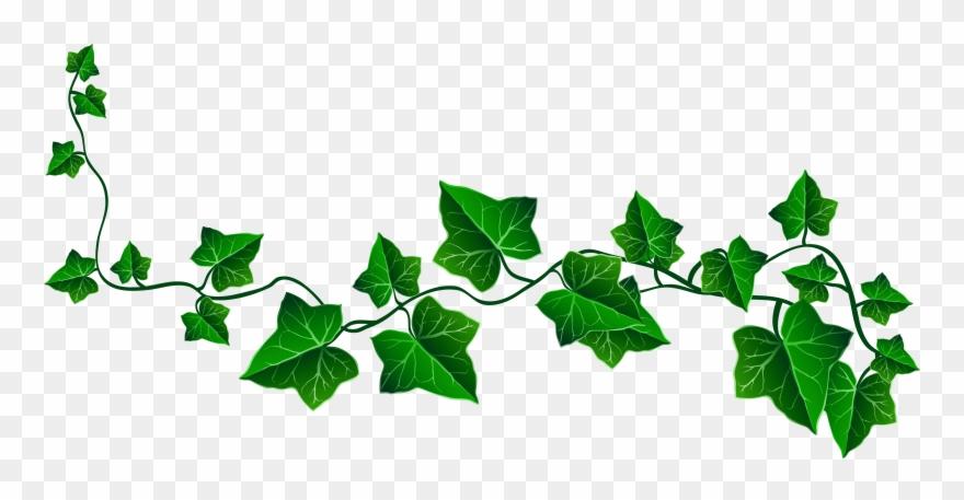 Vine Ivy Decoration Png Clipart Picture , Transparent