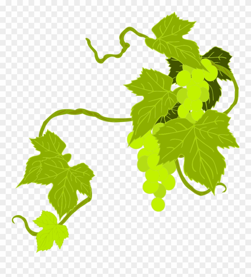 Onlinelabels Clip Art Grapes Grape Leaves Clipart Png Transparent 14001 Pinclipart