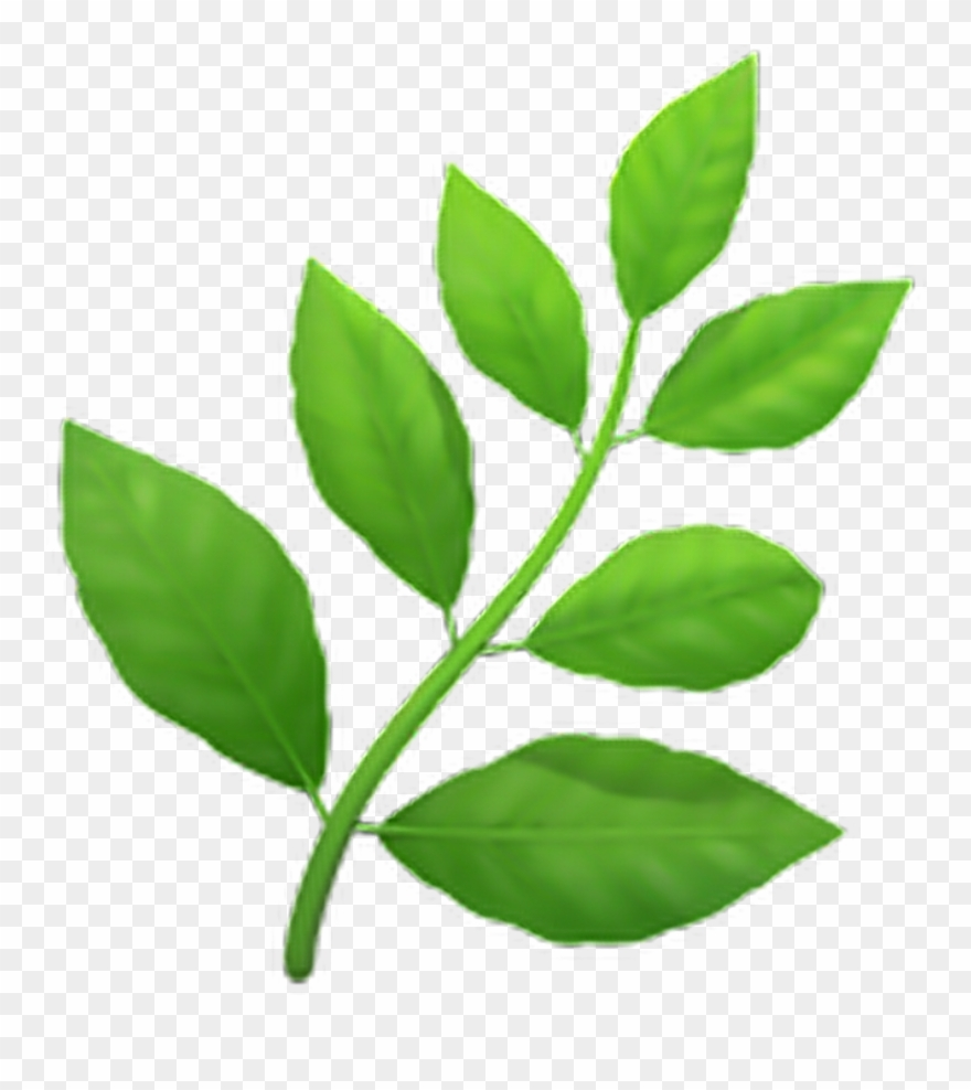 Image result for leaf emoji
