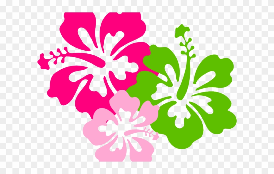 Hibiscus Clipart Colorful Hawaii Flowers With No Background Png