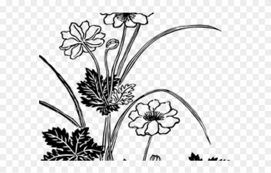 Drawings of flowers transparent. Drawn vintage flower spot