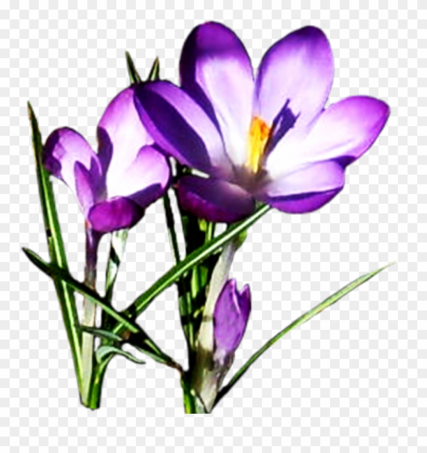 Free Clipart Spring Flowers Flower Pictures Download Purple Spring