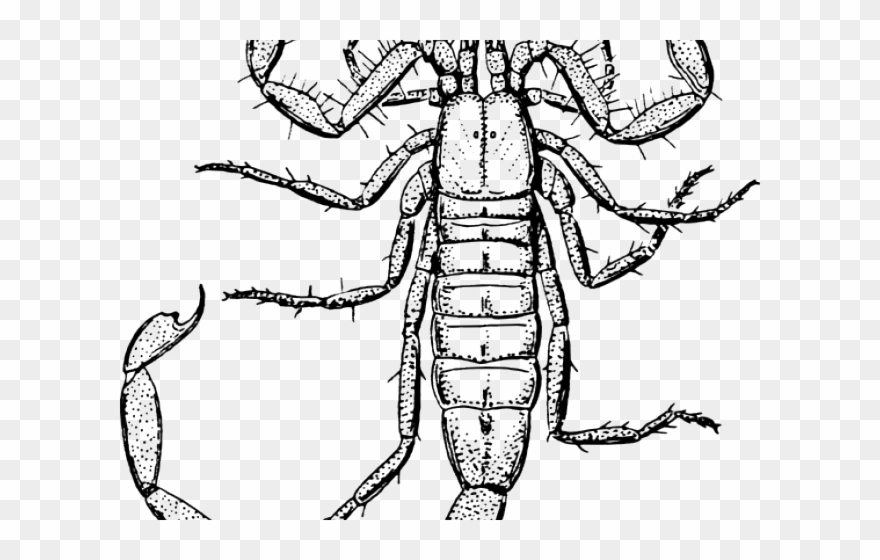 Scorpion Clipart Gambar Death Stalker Scorpion Drawing Png